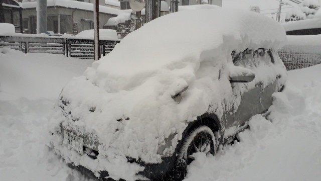 雪まみれのDualis.jpg